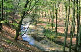 Furlbachtal in der Senne