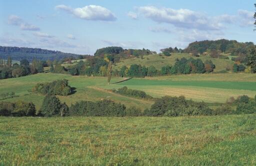 Ökologischer Landbau: Strukturreiches Grünland mit Hecken im Mittelgebirge