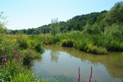 Biotop am Wasser